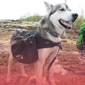 Dog trekking equipment