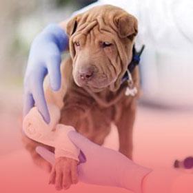 Dog-treatment