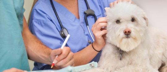 assurances pour chiens